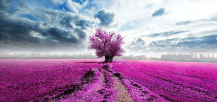Щастието не е нещо, което да отложиш за бъдещето; то е нещо, което да развиеш в настоящето...